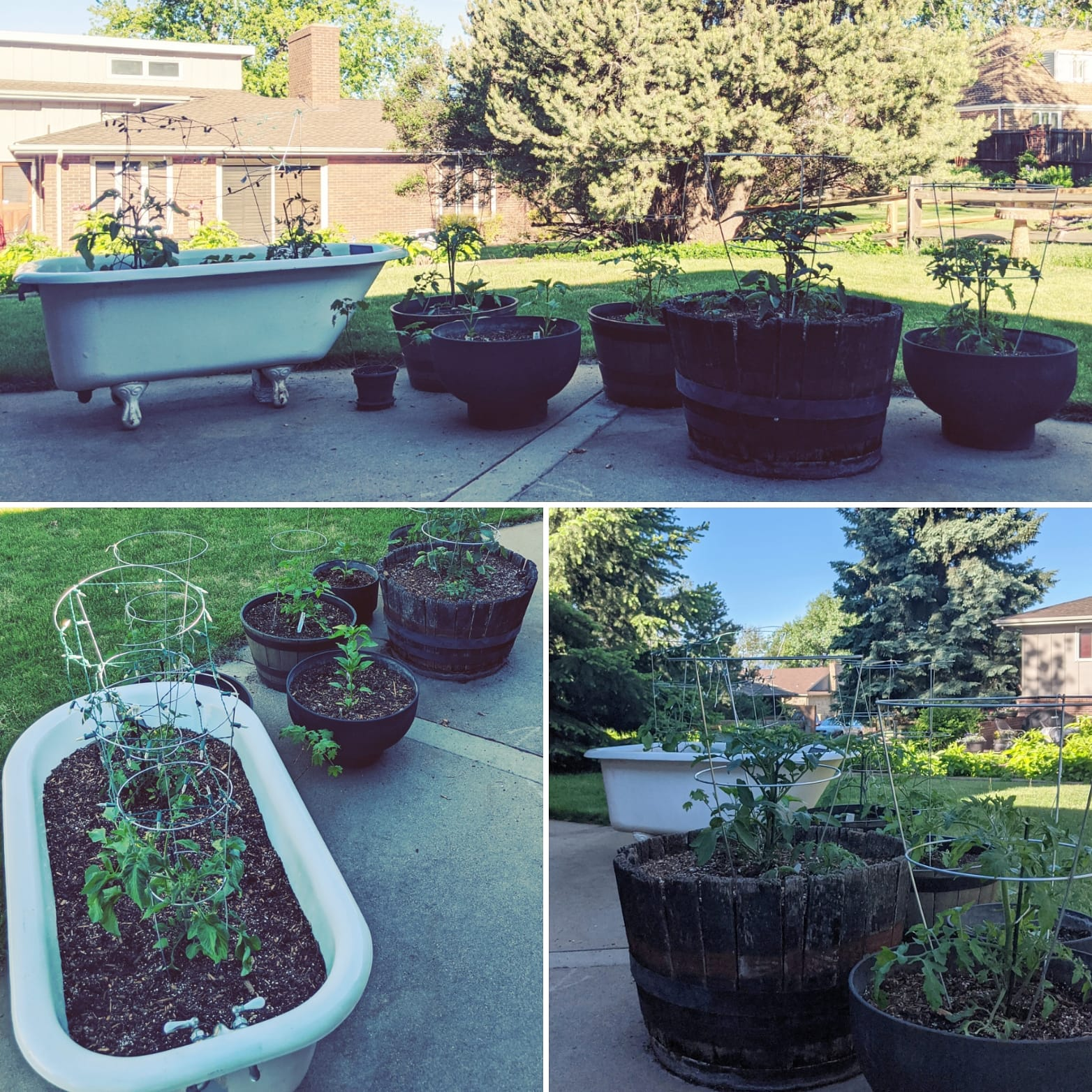 roland and galina's backyard garden